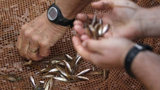 The Ministry of Natural Resources and Forestry wants to hear from the public on proposed changes to baitfish use in the province.