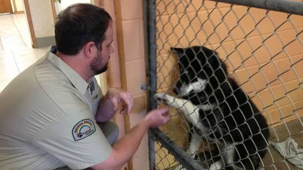 Richard Paquette, manager of the Rainbow Animal Shelter, spends time with a dog at the facility. The shelter has started up a lost pets section on its website.