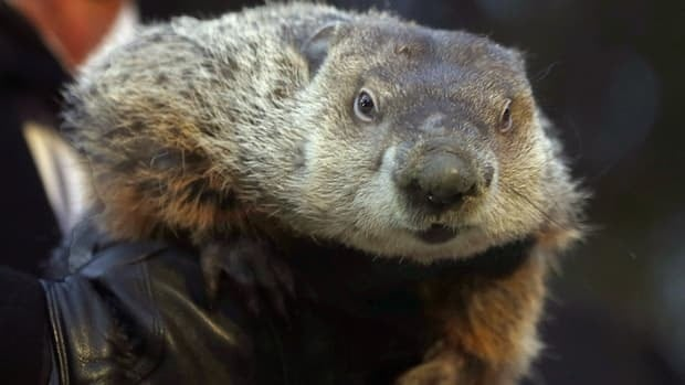 Groundhog Club co-handler Ron Ploucha holds weather-predicting rodent Punxsutawney Phil after the club said the animal did not see his shadow and there would be an early spring during the annual Groundhog Day ceremony in Punxsutawney, Pa., on Feb. 2.