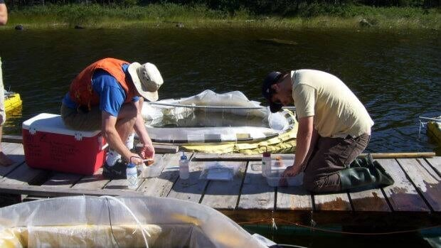 Trent University students conduct nano-silver experiments at the Experimental Lakes Area in northern Ontario last summer.