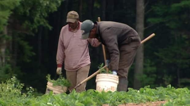 Many farmers in the Annapolis Valley depend on temporary foreign workers to harvest their crops.