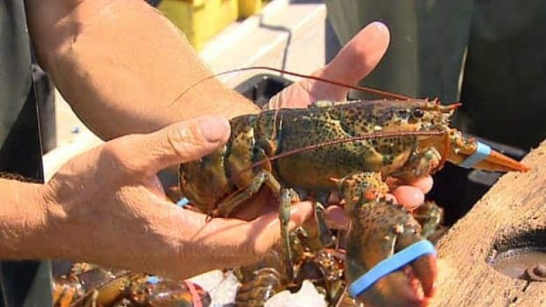 Lobster Deutsch
