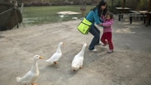 si-geese-china-220-cp-04231