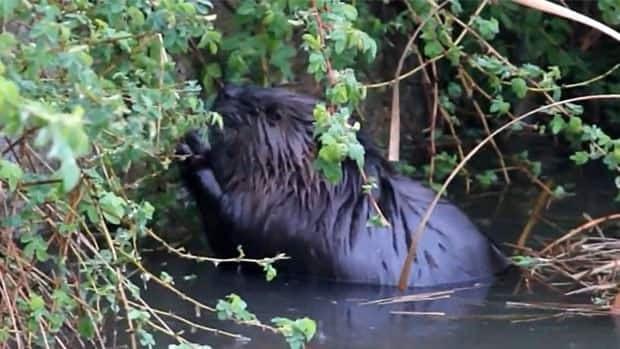 inside---beaver-image