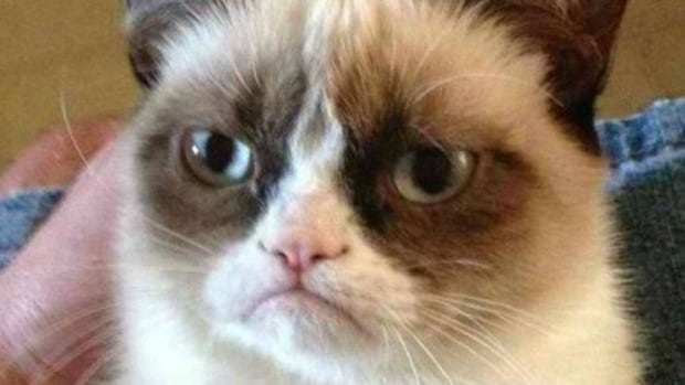 Grumpy Cat in Vancouver to film Christmas movie - British Columbia ...