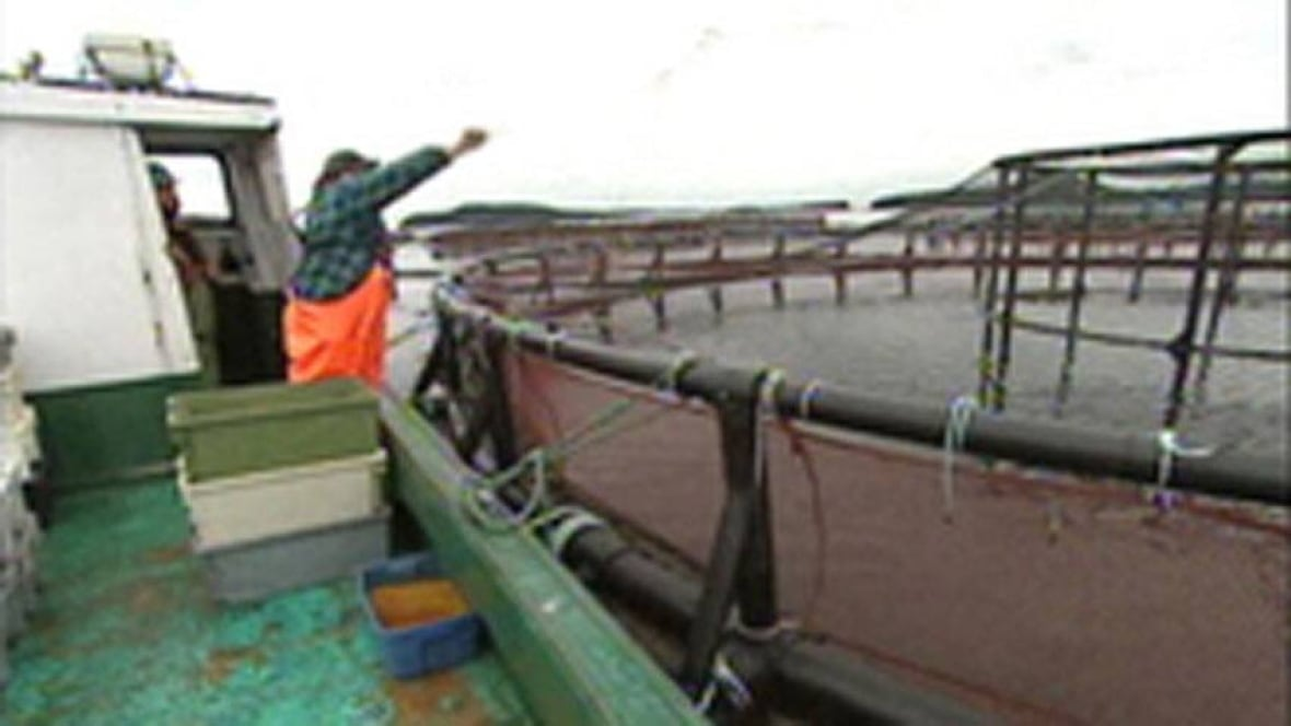 Ndp rejects a fish farm application for the first time for Fish farms in california