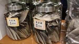hi-shark-fin-cp-00162625-4col