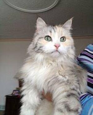 mi-cat