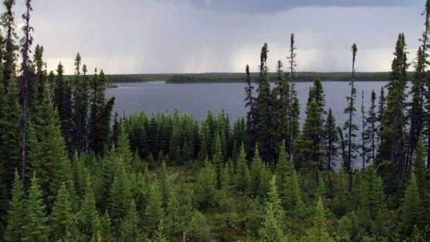 Forestry companies argued that the size of land that conservationists wanted protected in the deal would have shut down several mills and projects in Ontario and Quebec, part of whose boreal forest is seen in the photo above.