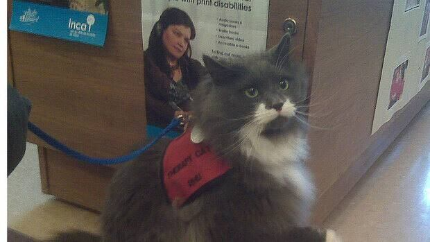 Rhubarb the cat has already helped two children with their reading, and will start work with a new child next month.