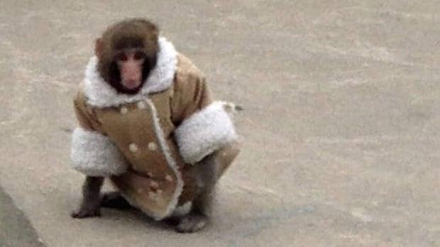 hi-ikea-monkey-852-3706068_