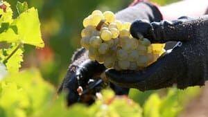 hi-bc-130114-wine-cp-03436932-4col