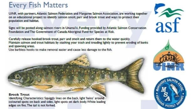 Part of a picture outlining the differences between young salmon and brook trout.