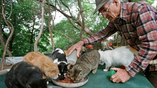 René Chartrand spent years feeding and looking over the colony of stray cats on Parliament Hill.
