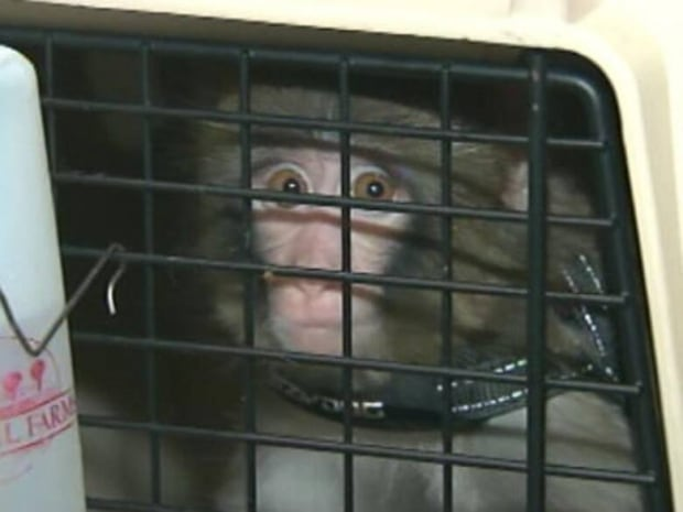 Darwin in a cage