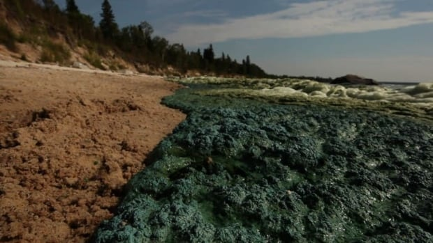 Lake Winnipeg was hit particularly hard by blue green algae blooms last year and now, the algae has struck again in Alberta, impacting two bodies of water northeast of Claresholm.