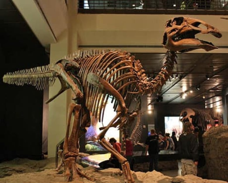 T. rex tooth found lodged in escaped prey