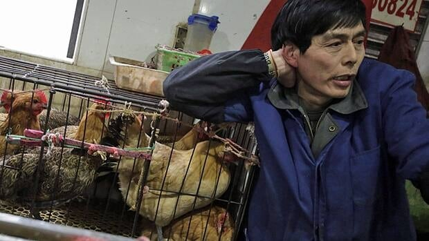 Many H7N9 patients so far said they had recent exposure to animals while working at or visiting a live-animal market.