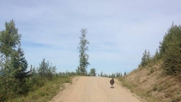 Are you missing an emu? This one was seen trotting down a forest service road between Prince George and Quesnel, B.C.