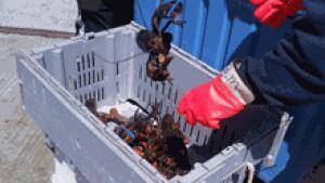 nb-lobster-fishermen-escuminac