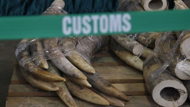 Hong Kong authorities have made their third big seizure of illegal ivory in three months after confiscating more than a ton of the elephant tusks worth $1.38 million Cdn.