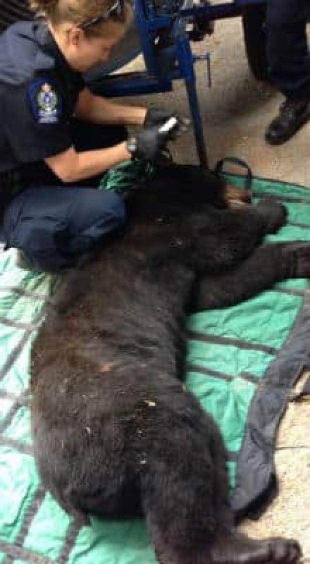 mi-bc-130610-bear-hunt-long
