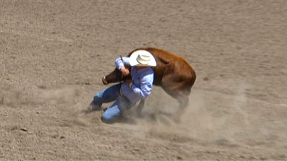 Injured Steer Euthanized At Calgary Stampede Rodeo