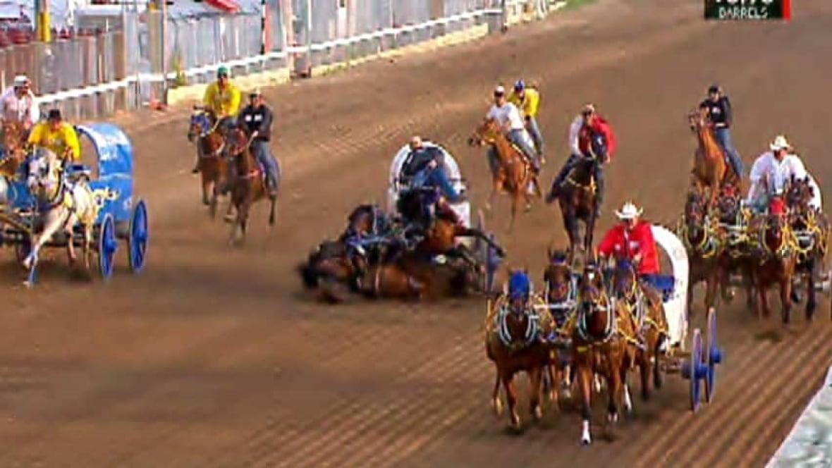 3 Calgary Stampede Horses Die In Chuckwagon Crash
