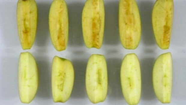 hi-bc-120706-arctic-apple