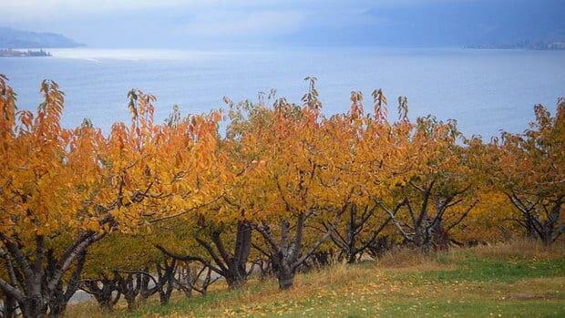 hi-bc-130510-okanagan-orchard-8col