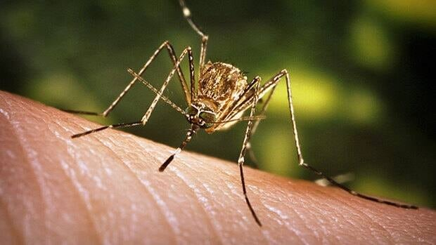 Using repellent containing DEET and wearing light-coloured clothing with long sleeves can keep mosquitoes at bay.