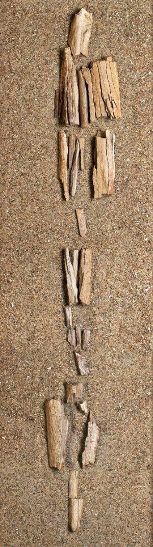 bones---internal