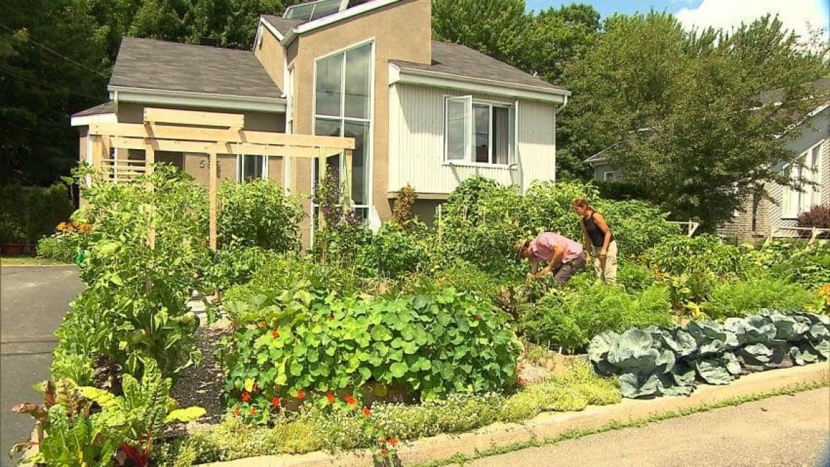 Drummondville couple fights to keep vegetable garden Montreal