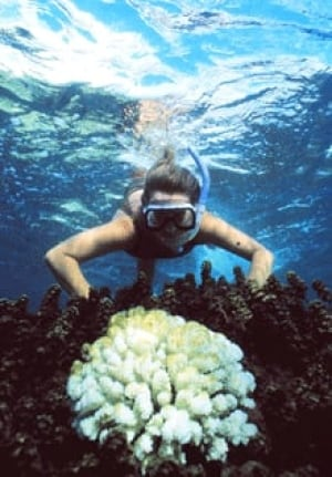 si-barrier-reef