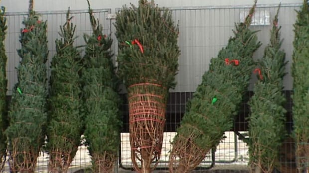 A North Battleford-based business is now selling trees in place of the Y's Men, according to Ted O'Brien.