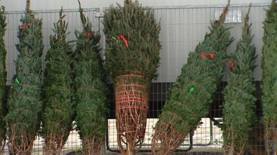 Ikea\u0027s Christmas tree sale worries Winnipeg group
