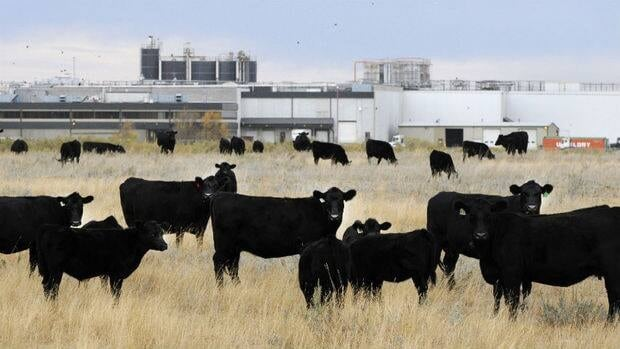 The XL Foods meat plant in Brooks, Alta., will be able to resume shipments to the U.S. after it was decertified on Sept. 13 because of E. Coli concerns.