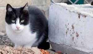 sm-300-feral-cat-yakima-01888559