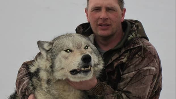 Joe Fleming from Spillars Cove, near Bonavista, with the wolf he killed in March.