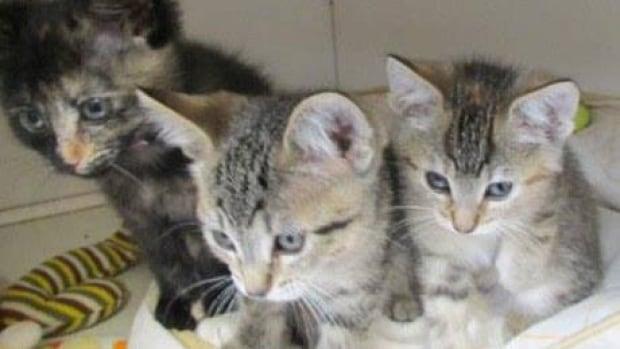 fi-pa-kittens-1