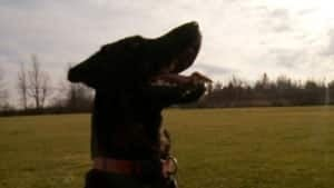 hi-ottawa-ozzy-dog300