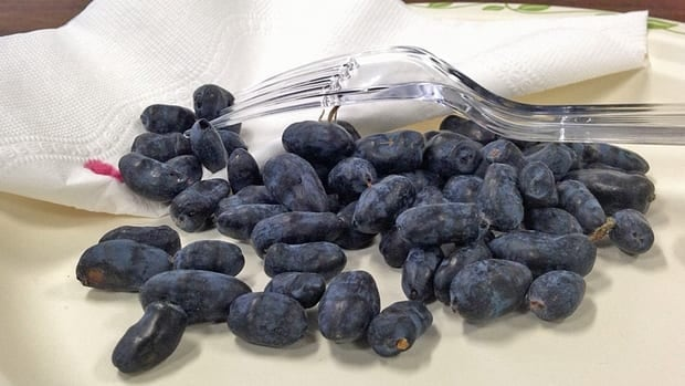 The haskap berries from Leisure Farms are being sold at Eat Local Sudbury, Northern Harvest in New Liskeard, and the North Bay farmer's market.