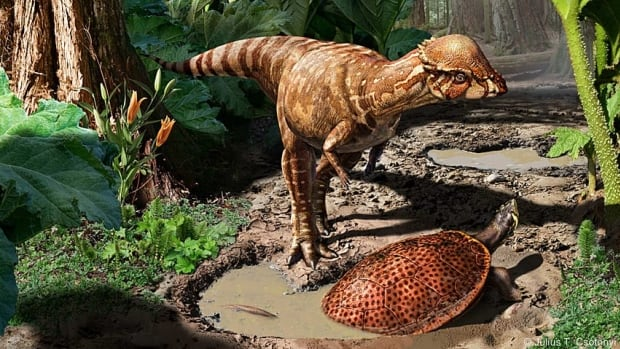 Acrotholus audeti was plant-eating dinosaur that walked on two legs and weighed about 40 kilograms.