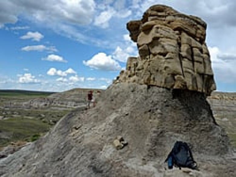 Little dome-headed dinosaur discovered in Alberta