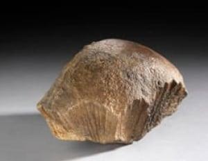 sm-250-bonehead-fossil-brian-boyle-rom-56220