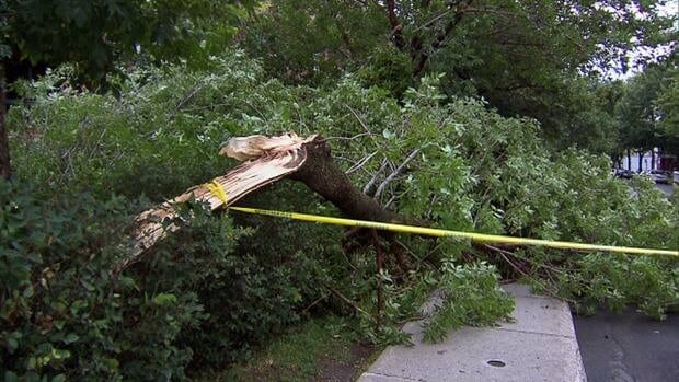 A wild storm started Friday morning and lasted about 18 hours, according to Environment Canada. It kicked off in Callander near North Bay with severe wind, causing the town to declare a state of emergency, before moving eastward and southward. The storm left plenty of downed trees in its wake.