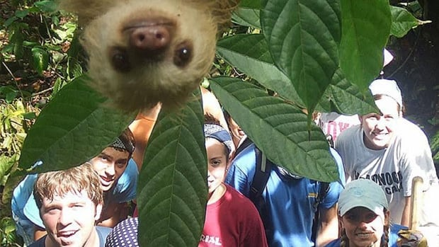 A young sloth drops in on a portrait of international volunteers.