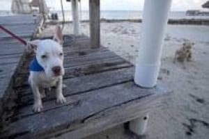 si-mcafee-dog-220-03593868