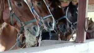 si-nb-horses-220