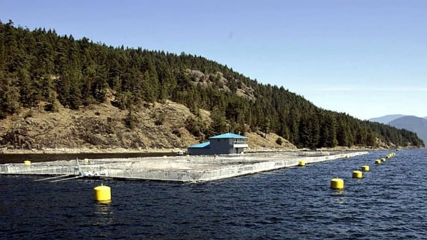 B.C. salmon farms are on alert after a lethal virus infected a farm north of Tofino.